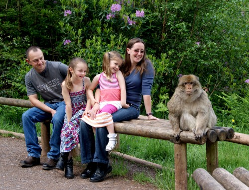 Monkey Forest Trentham